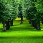 lush-trees-grass-park_wallpapers_45987_1280x1024